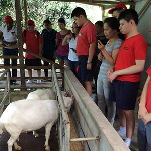 Goats Farm 2015